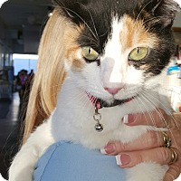 Adopt A Pet :: Cal - Pasadena, CA