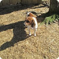 Adopt A Pet :: Dash - Gadsden, AL