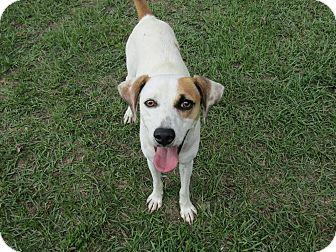 Hound (Unknown Type) Mix Dog for adoption in Smithtown, New York - Eva