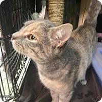 Adopt A Pet :: Lexi - East Brunswick, NJ