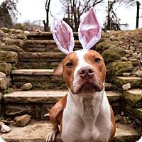 Adopt A Pet :: Watson - Pittsburgh, PA