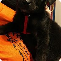 Adopt A Pet :: Asher - Baltimore, MD