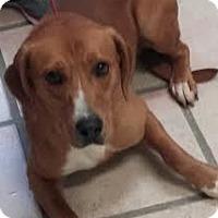 Adopt A Pet :: Jason - Newburgh, IN