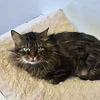 Adopt A Pet :: Rosemary - Greensburg, PA