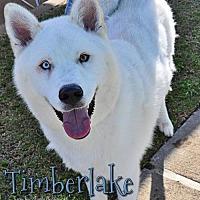 Adopt A Pet :: Timberlake - Carrollton, TX