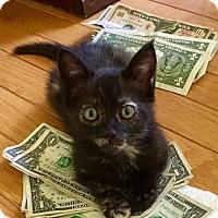 Adopt A Pet :: Paisley - Mount Pleasant, SC