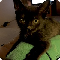 Adopt A Pet :: Ranger - Monroe, GA