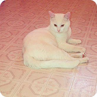 Domestic Shorthair Cat for adoption in Douglas, Ontario - Caspur