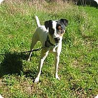Adopt A Pet :: Mister - Crescent City, CA