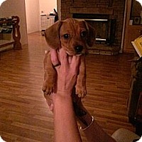 Adopt A Pet :: Cinnamon - Fort Valley, GA