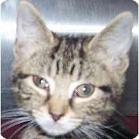Adopt A Pet :: Coco - Annapolis, MD