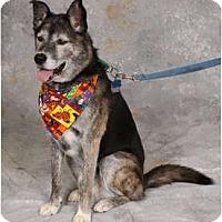 Adopt A Pet :: Buddy - Fort Hunter, NY