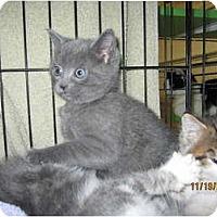 Adopt A Pet :: Scooter - Catasauqua, PA
