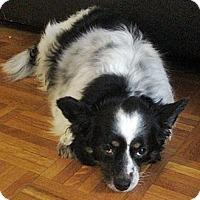 Adopt A Pet :: Cocotte - Toronto, ON