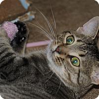 Adopt A Pet :: Si - Plainville, MA