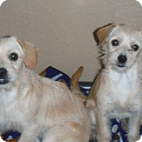 Adopt A Pet :: Buster - Arenas Valley, NM