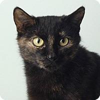 Adopt A Pet :: Aspen - Smithfield, NC
