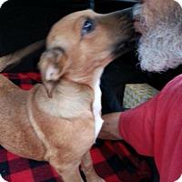 Shepherd (Unknown Type) Mix Dog for adoption in Von Ormy, Texas - Missy (VE)