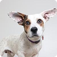 Adopt A Pet :: Zane D161982 - Edina, MN