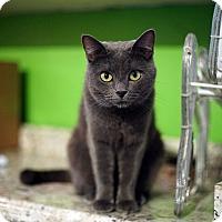 Adopt A Pet :: Gladys - Los Angeles, CA