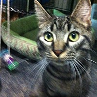 Adopt A Pet :: Autumn - Madisonville, LA