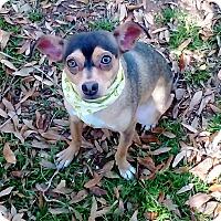 Adopt A Pet :: Madrecita - Vernon, TX