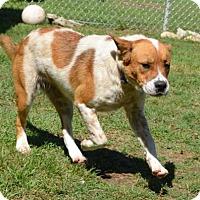 Adopt A Pet :: alexandrian - Ridgeland, SC