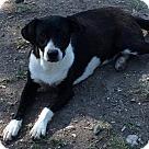 Adopt A Pet :: Lauralie