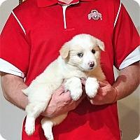 Adopt A Pet :: Benji - South Euclid, OH