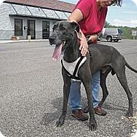 Adopt A Pet :: Duke - Wickenburg, AZ
