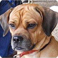 Adopt A Pet :: Bogart - Kingwood, TX