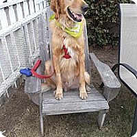 Adopt A Pet :: Buster - Santa Monica, CA