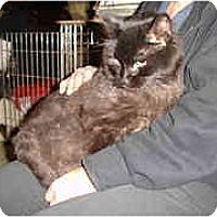 Adopt A Pet :: Jackie Gleason - Lombard, IL