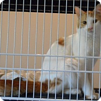 Adopt A Pet :: Lenny - Edmonton, AB