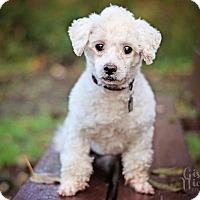 Adopt A Pet :: Bixby - Sheridan, OR