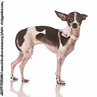 Adopt A Pet :: Porsha - Dallas, TX
