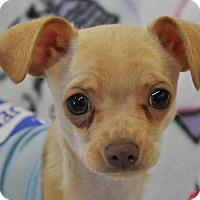Adopt A Pet :: Jingle - Ormond Beach, FL