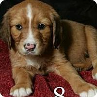 Adopt A Pet :: Freddie - Lufkin, TX