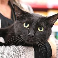 Adopt A Pet :: Taylor - Westchester, CA