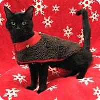 Adopt A Pet :: Maggie - Redwood Falls, MN