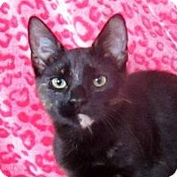 Adopt A Pet :: Elena - Lloydminster, AB