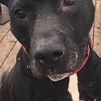Adopt A Pet :: PUCK - Pittsburgh, PA
