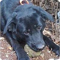 Adopt A Pet :: Sasha - West New York, NJ