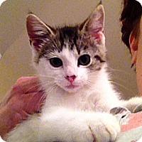 Adopt A Pet :: Lennon - Green Bay, WI