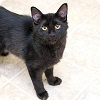Adopt A Pet :: Danny - Shelton, WA