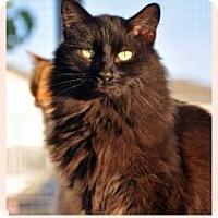 Adopt A Pet :: EXPRESSO - Alamogordo, NM