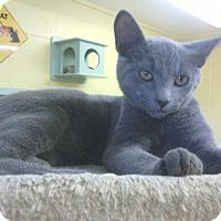 Adopt A Pet :: Smoke - Lake Charles, LA