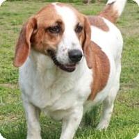 Adopt A Pet :: Harley - Salem, NH