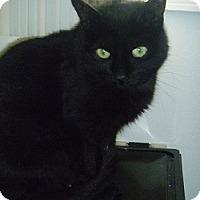 Adopt A Pet :: Malibu - Hamburg, NY