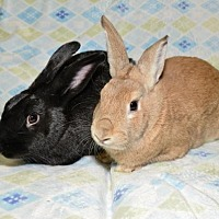 Adopt A Pet :: Alesha and Hamilton - Chesterfield, MO